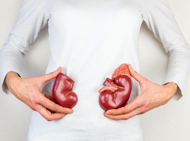 Protein dan Ginjal Anda – Hubungan Sebenarnya (Bagian 1)